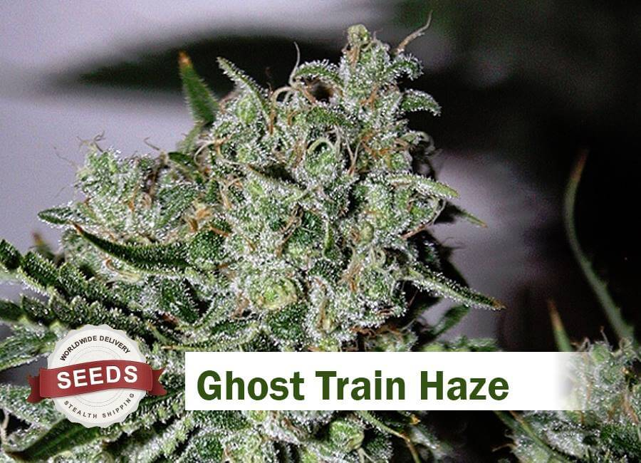Ghost Train Haze Seeds