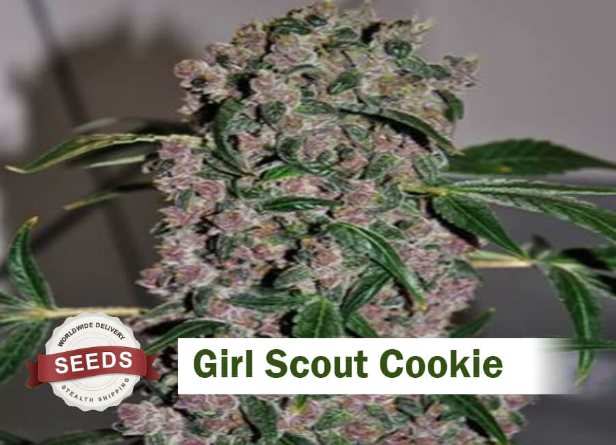 Girl Scout Cookie Seeds